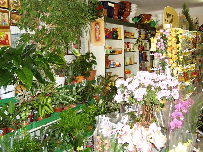 Květinářstvi Chudějová - vše pro orchideje